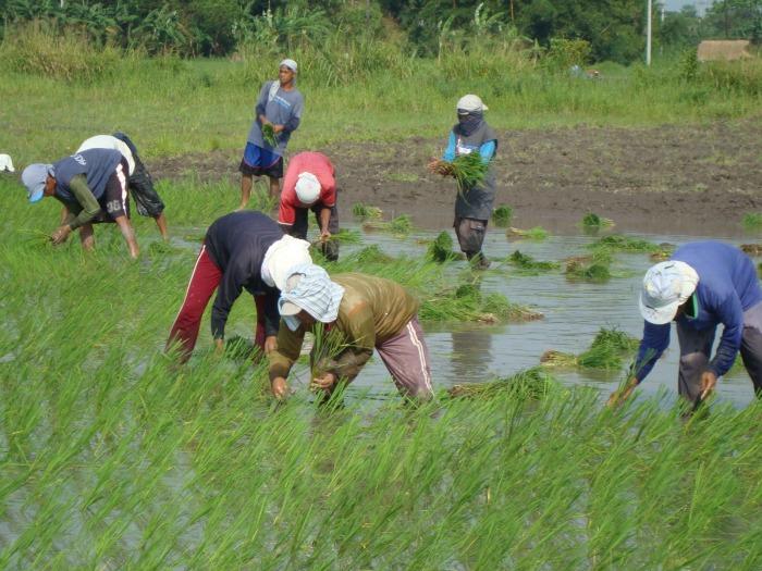Bungkalan: Mga Aral mula sa Hacienda Luisita at Negros