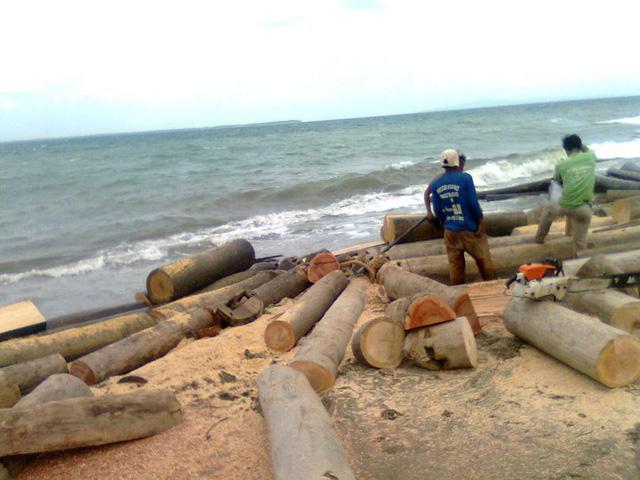 One-year logging ban proposed