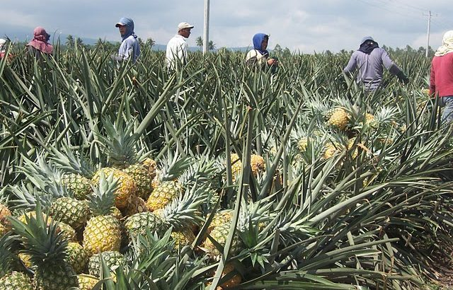 'Farmers are misled, ignored in the Philippines'