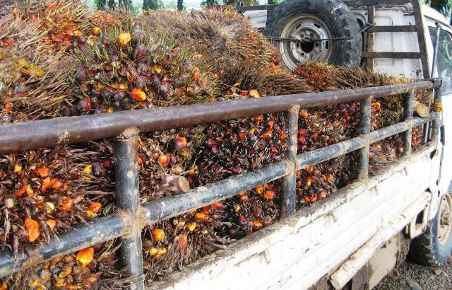 Oil palm company rehires 'unjustly' axed 293 union workers