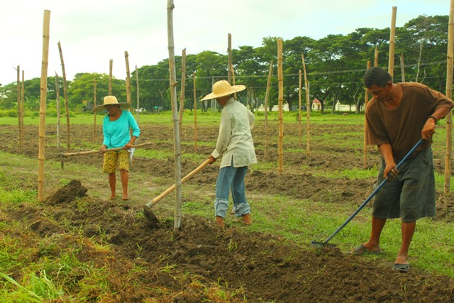 Luisita farmers find allies in foreign activists