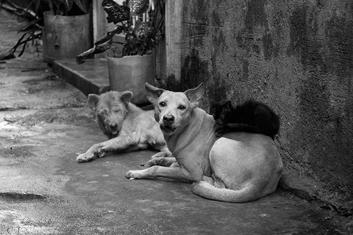 These animals show that stereotyping is mainly a human predilection. (Commonwealth, Quezon City)