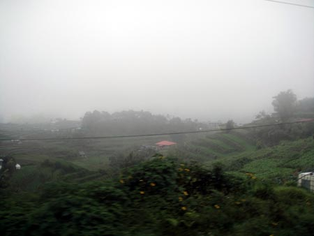Misreporting frost damage triggers price hikes, Benguet governor says
