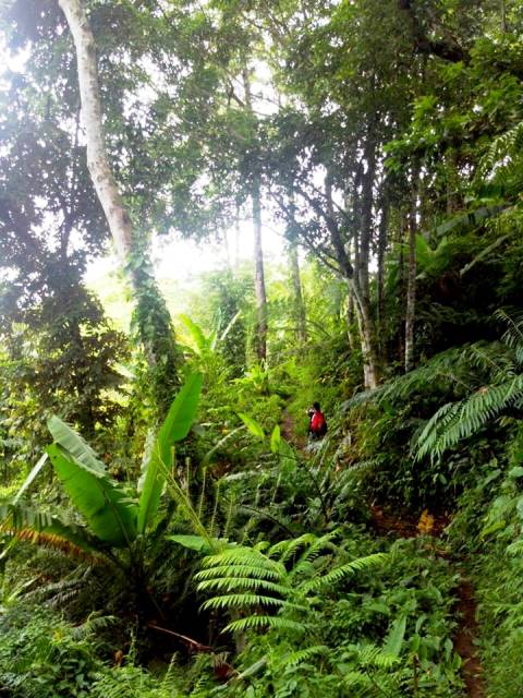 Delegate of recent fact-finding mission surveying part of Talaingod's rainforest May 2014 / Photo courtesy of Kalikasan PNE)