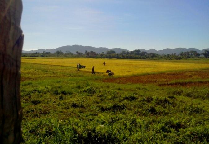 Daan-daang ektarya ng lupain sa Bgy. Esteves at Dibet ang kinakamkam ng malalaking panginoong maylupa (Photo courtesy of C. Bautista / Bulatlat.com)