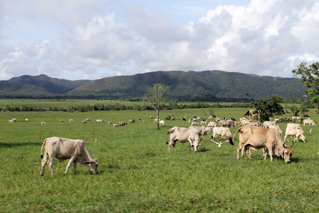 The nearly 40,000-hectare Yulo King Ranch is the largest agrarian anomaly in the country, according to peasant groups. (Photo by J. Ellao / Bulatlat.com)