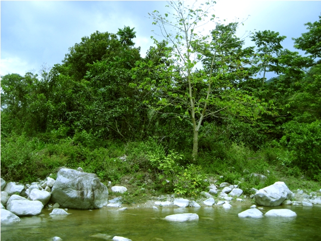 A sprawl of green in the unaffected Lintungan Riverside in Runruno. (Photo by AGHAM/Kalikasan PNE/ Bulatlat.com)