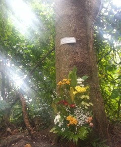 'The forest lives on' :  Slain botanist's legacy blooms amid 4 years of injustice