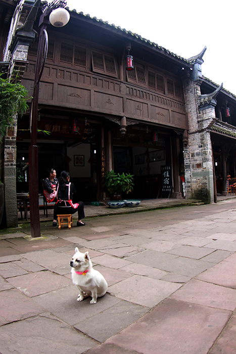 China's ancient imperial households developed some of today's most popular toy dogs.  This canine must feel it is living the life his ancestors had on this old street. (Huanglongxi Ancient Town, Sichuan Province, People's Republic of China)