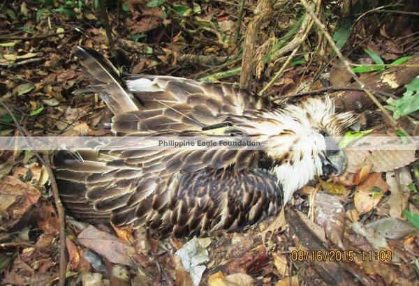 Death of Ph eagle shows gov't failure to protect biodiversity, says green group