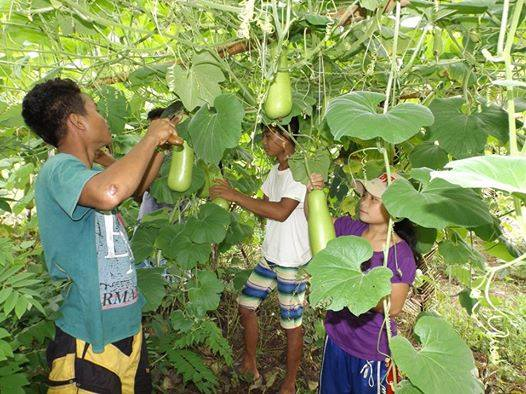 FILE PHOTO: Students put their theories to practice at the vegetable gardens of the alternative Lumad school Alacadev. (Photo from Alcadev website)