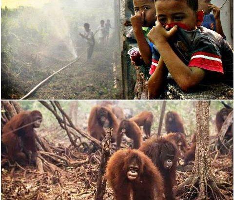 Ang nakakalasong usok at ang plantasyon ng palm oil sa Indonesia