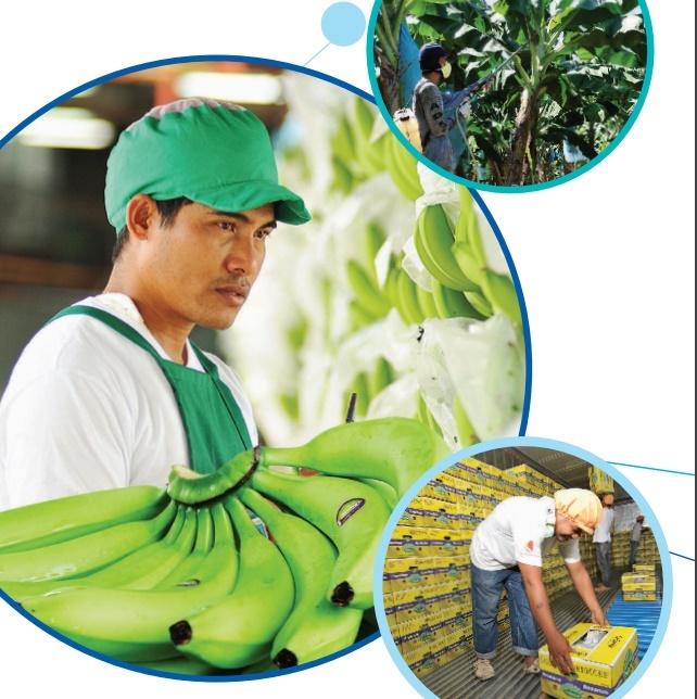 Musahamat Farms, banana workers