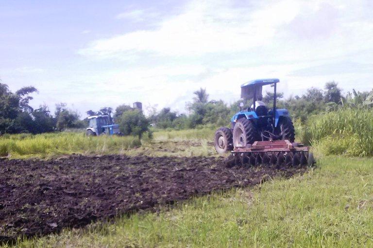 Cojuangco-Aquino lackeys order destruction of crops in Luisita — farmers