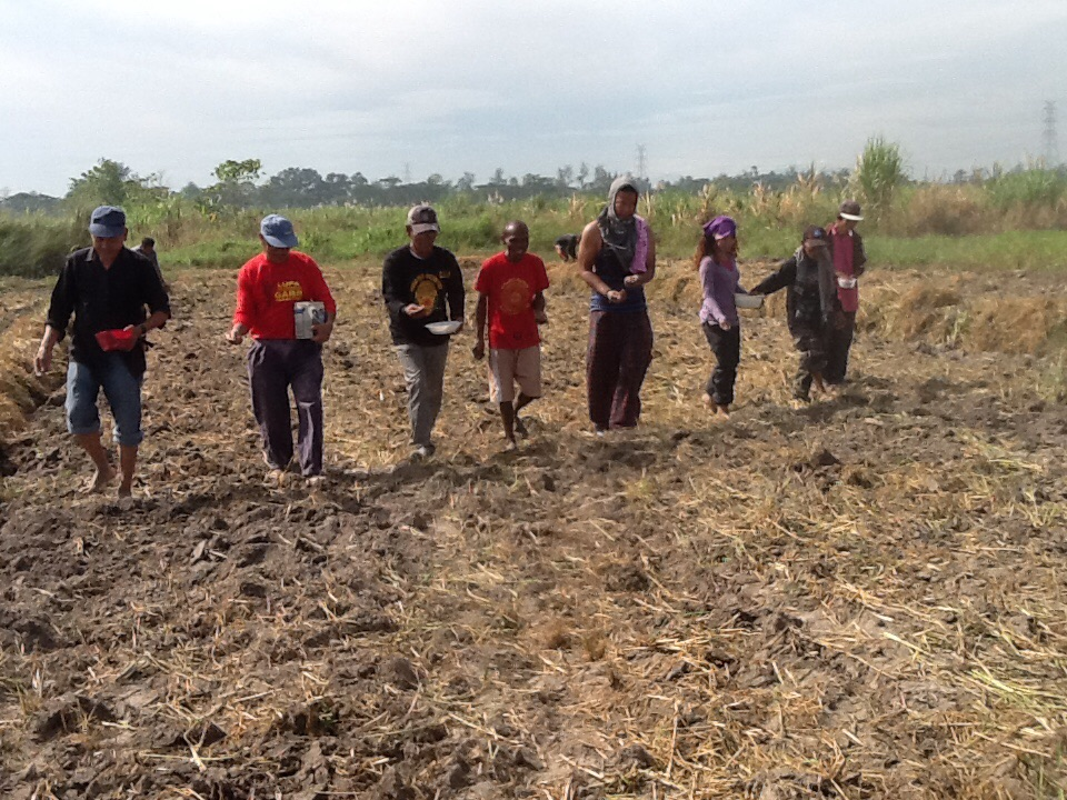 Peasant leaders in formation while sowing mung bean seeds (Photo by Dee Ayroso/Bulatlat)