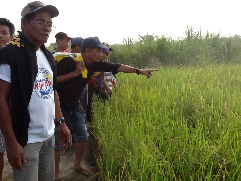 "UMA secretary general points to the stretch of productive lands covered by the bungkalan. lands are all still in the hands of the Cojuangco-Aquino,"" he said. (Photo by Dee Ayroso/Bulatlat)"