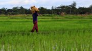 What the Rice Tariffication Law violates