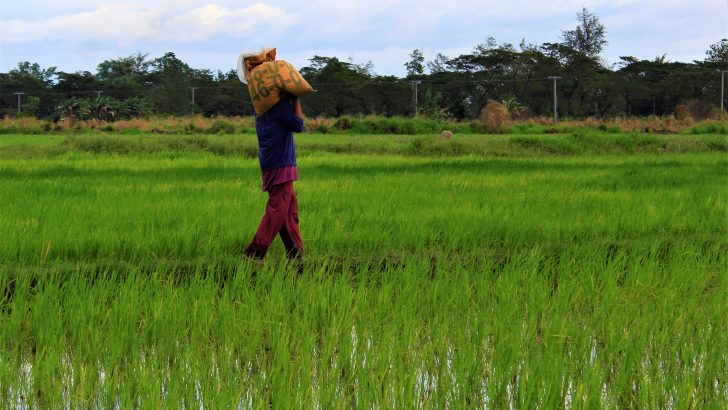 Progressive solon, peasant groups push for law on rice industry dev't