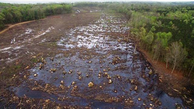 wetland clearcut