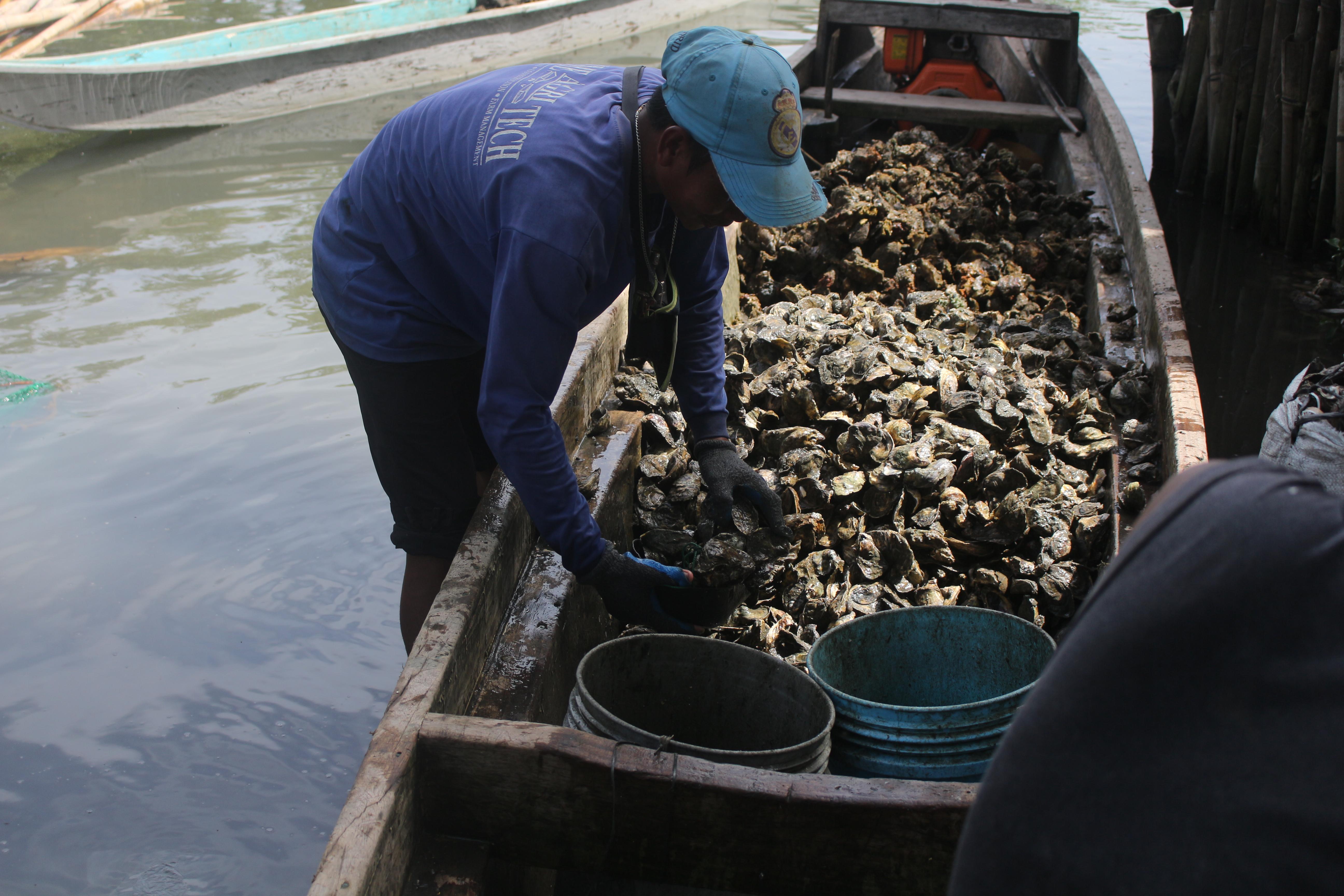 A day's harvest of oysters in Buntod,  Pan-ay, Capiz (Photo by Daniel Boone/Bulatlat)