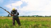 'NTF-ELCAC budget can feed 4.2M Filipinos if redirected to agri subsidy'