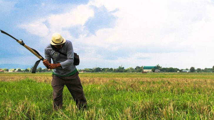 Success in sustainable bungkalan farming in Mindanao hailed at national confab