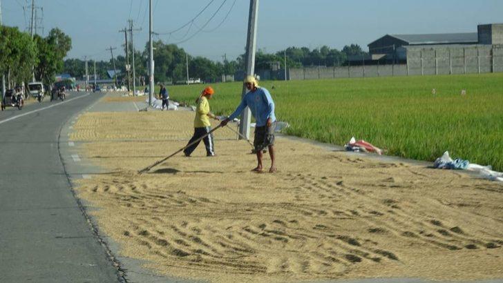 Gut issues plague gov't: Rice problem topmost