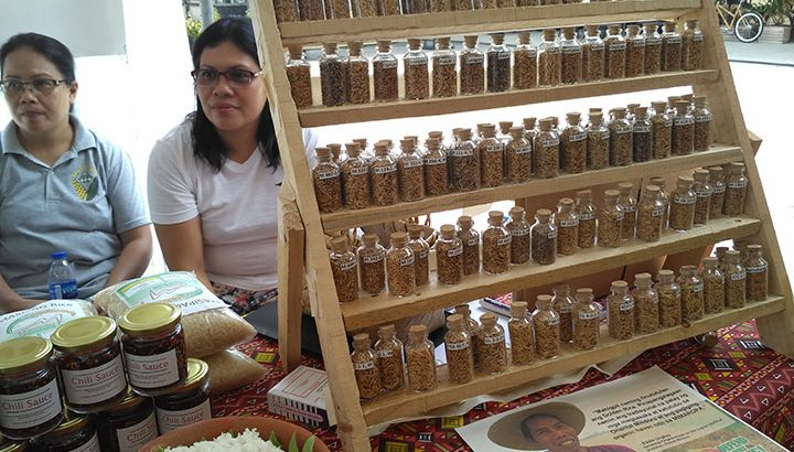 'Golden rice is Dengvaxia in agriculture' – advocates, farmers