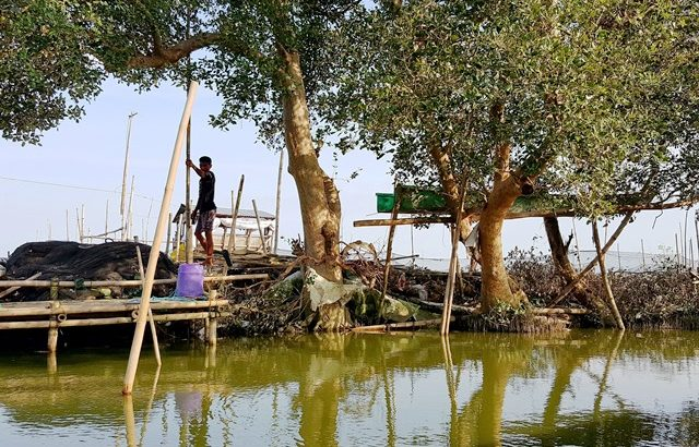 Cutting of mangroves result in heavier floods in Taliptip