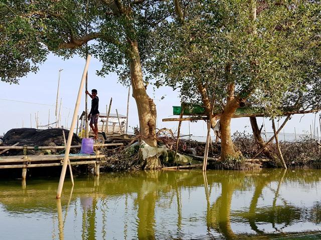 mangrove and fisherman