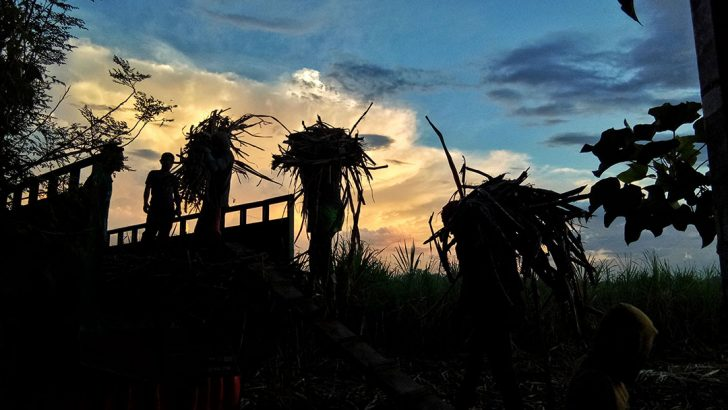 Solons file reso to block liberalization of sugar sector