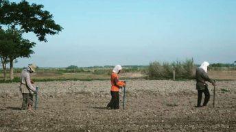 Corn planters
