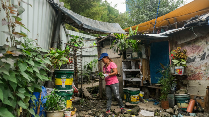 San Roque's women, growing their own food while strengthening their organization