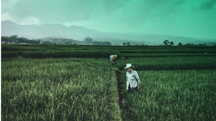 Wire| Farmers, not corporations, will transform the food system